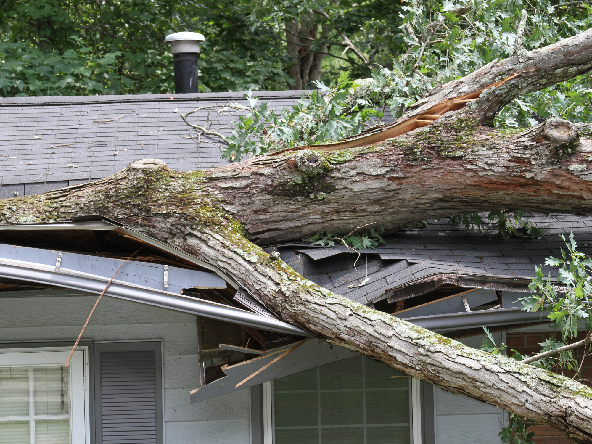 Disaster as tree falls through roof